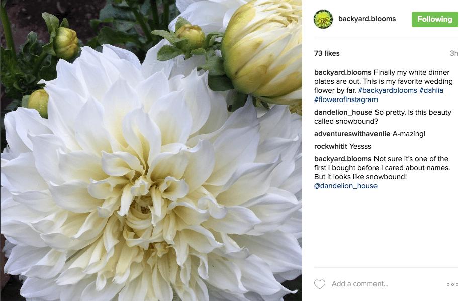 Floral Posts Kickstagram